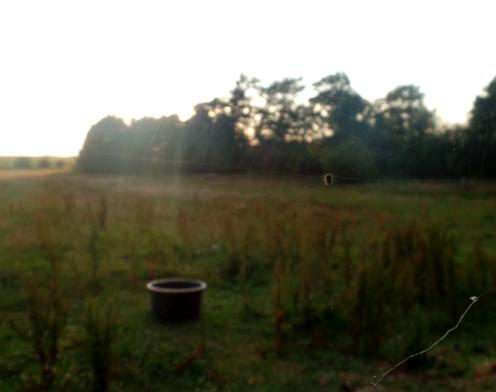 Anna's pasture